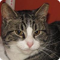 Adopt A Pet :: Arthur - Walden, NY
