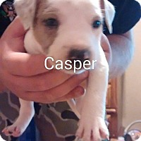 Adopt A Pet :: Casper - Surprise, AZ
