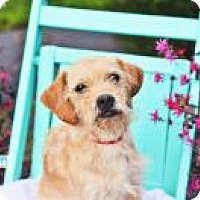 Adopt A Pet :: Sunflower - Peachtree City, GA