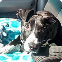 Adopt A Pet :: JENNY - CHICAGO, IL