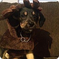 Adopt A Pet :: Jill - Pitt Meadows, BC