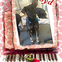 Adopt A Pet :: Syd in CT - Manchester, CT