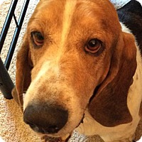 Adopt A Pet :: Rollie - Fort Lauderdale, FL