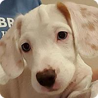 Adopt A Pet :: ELLIE - Pine Grove, PA