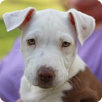 Adopt A Pet :: Maeve - ADOPTION IN PROGRESS - Nanuet, NY