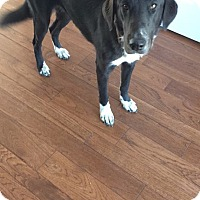 Adopt A Pet :: Roxie - Woodstock, ON