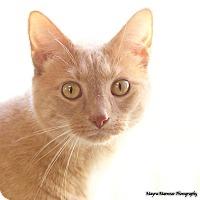 Adopt A Pet :: Lupin - Homewood, AL