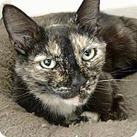 Adopt A Pet :: Armenia - Tampa, FL