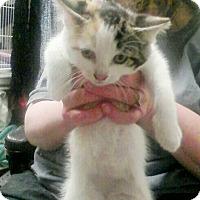 Adopt A Pet :: Coconut - Trevose, PA
