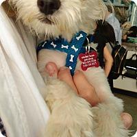 Adopt A Pet :: Ringo - Thousand Oaks, CA
