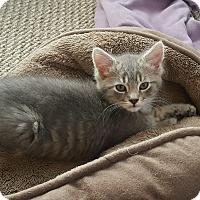 Adopt A Pet :: Biggie - Richmond, VA