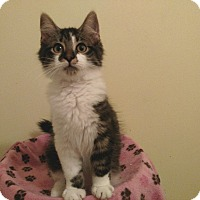 Adopt A Pet :: Griffin - Richmond, VA