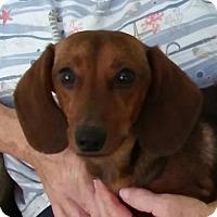 Adopt A Pet :: Rubio in MD - Columbia, TN