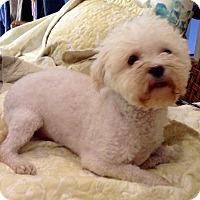 Adopt A Pet :: Ozzie - Santa Ana, CA