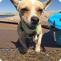 Adopt A Pet :: PETER - Las Vegas, NV