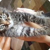 Adopt A Pet :: Brody - Vacaville, CA