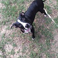 Adopt A Pet :: Tessa - Bend, OR