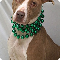 Pointer Mix Dog for adoption in Newnan City, Georgia - Bonnie