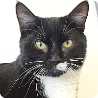 Adopt A Pet :: F Scott Fitzferal - Norwalk, CT