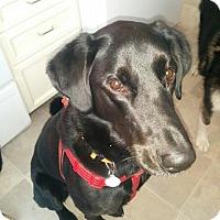 Adopt A Pet :: Rebel - Edmonton, AB