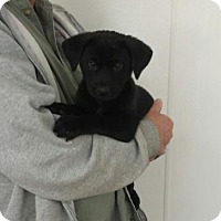 Adopt A Pet :: Gypsy - Livingston, TX