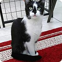 Adopt A Pet :: Pippen - Austintown, OH