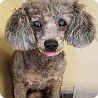 Adopt A Pet :: Poncho - Gulfport, MS
