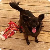 Adopt A Pet :: Dylan - Thatcher, AZ