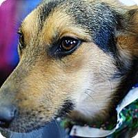 Adopt A Pet :: Abby - Pocahontas, AR