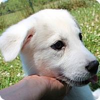 Adopt A Pet :: Neela - Foster, RI