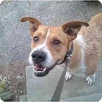 Adopt A Pet :: RILEY - Raymond, NH