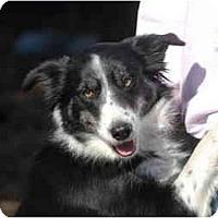 Adopt A Pet :: Diez - Ft. Myers, FL