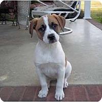 Adopt A Pet :: Ella (pending) - Adamsville, TN