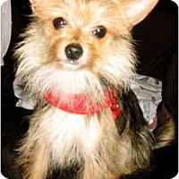 Adopt A Pet :: Deena - San Francisco, CA