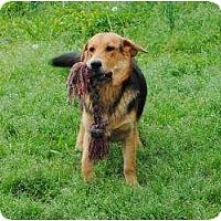 Adopt A Pet :: Max - New Boston, NH