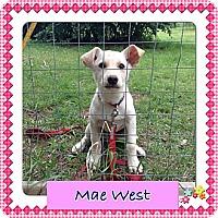Adopt A Pet :: Mae West - Saskatoon, SK
