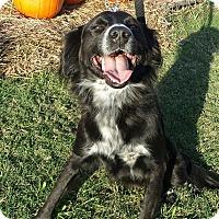 Adopt A Pet :: Othello - Knoxville, TN