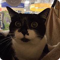 Adopt A Pet :: Sweetie - Monroe, GA