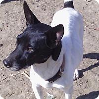 Adopt A Pet :: Callum In San Antonio - San Antonio, TX