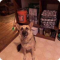 Adopt A Pet :: Blau (Guest) - Roswell, GA