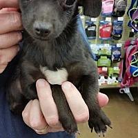 Adopt A Pet :: Speck - Fresno, CA