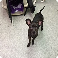 Adopt A Pet :: Fiona - Richmond, VA