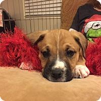 Adopt A Pet :: Cane - Las Vegas, NV