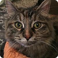 Adopt A Pet :: Robin - Livonia, MI