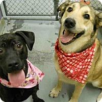 Adopt A Pet :: BAILEY - Anchorage, AK