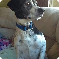 Adopt A Pet :: Russell - Huntsville, AL