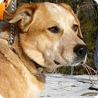 Adopt A Pet :: Circles - Canterbury, CT