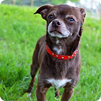 Adopt A Pet :: Hersey - Delaware, OH