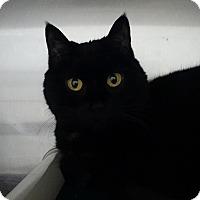 Adopt A Pet :: Delilah - Elyria, OH
