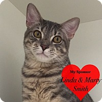 Adopt A Pet :: Chapman - San Leon, TX
